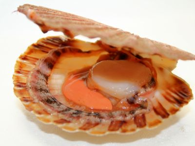 Gebakken coquilles op gestoofde spinazie in een nage van parmezaan