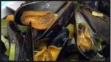 Mosselen met mojito in de wok